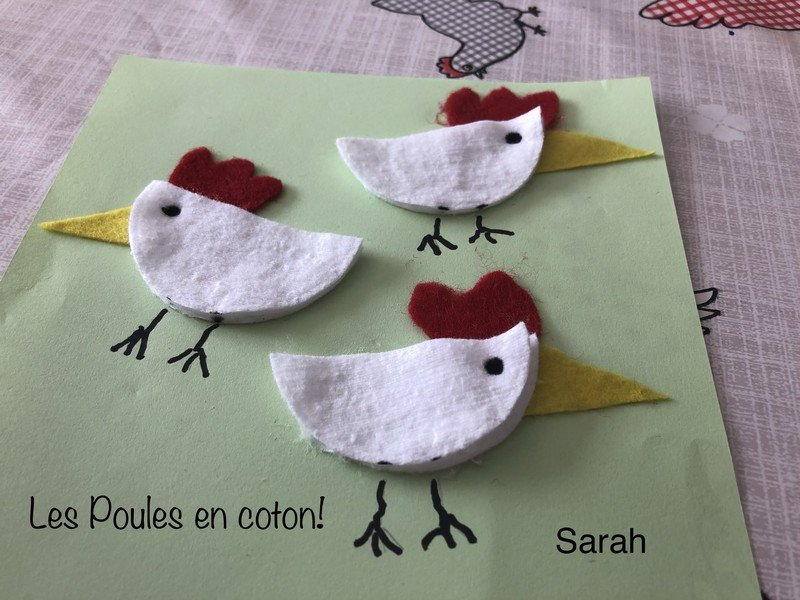 poules-coton-de-sarah